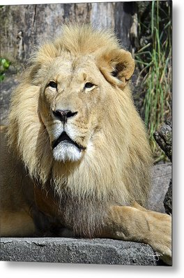 King Of Beasts Metal Print