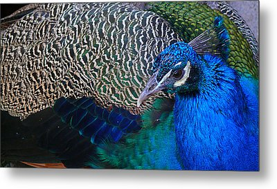 King Of Colors Metal Print