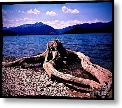King Of The Driftwood Metal Print by Garren Zanker