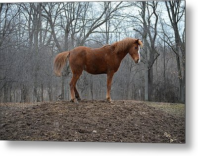 King Of The Hill Metal Print by Jennifer  King