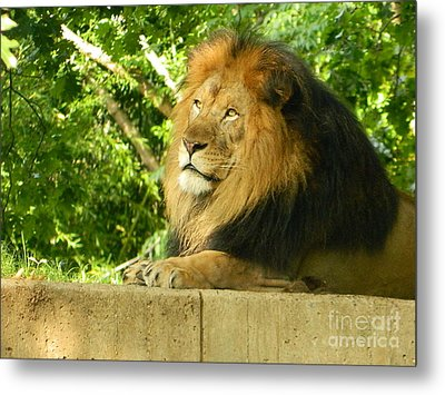 Metal Print featuring the photograph King Of The Jungle by Emmy Marie Vickers