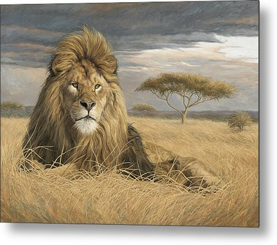 King Of The Pride Metal Print by Lucie Bilodeau