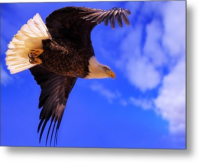 King Of The Sky Metal Print by Kadek Susanto