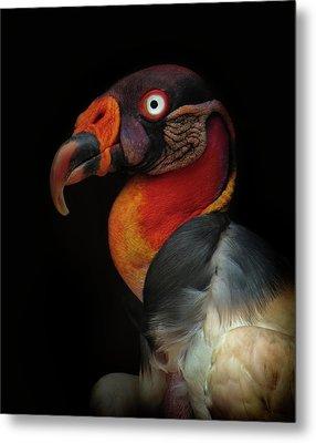King Vulture-sarcoramphus Papa Metal Print