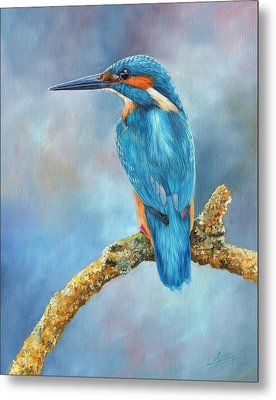 Kingfisher Metal Print by David Stribbling