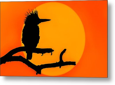 Kingfisher Sunset Metal Print by Brian Stevens