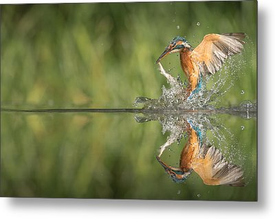 Kingfisher With Catch. Metal Print by Andy Astbury