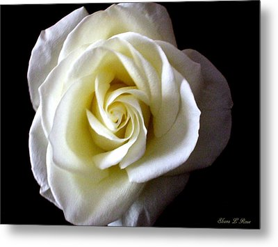 Metal Print featuring the photograph Kiss Of A Rose by Shana Rowe Jackson