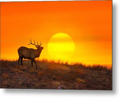 Kiss The Sun Metal Print by Kadek Susanto