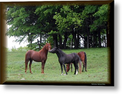 Kissing Cousins- The Paso Fino Stallions Metal Print by Patricia Keller