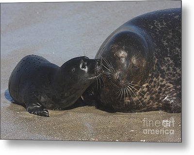 Kissing Seals Metal Print by Ruth Jolly