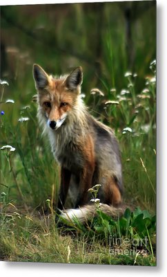 Kit Red Fox Metal Print by Robert Bales