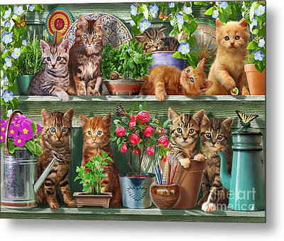 Kitchen Cats Metal Print by Adrian Chesterman