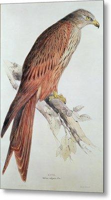 Kite Metal Print by Edward Lear