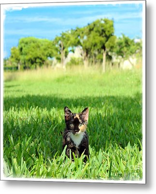 Metal Print featuring the photograph Kitten by Carsten Reisinger