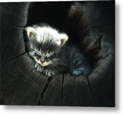 Kitten In A Log Metal Print