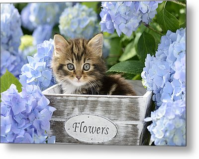 Kitten In Flowerpot Metal Print