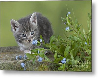 Kitten In Flowers Metal Print by John Daniels