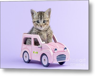 Kitten In Pink Car  Metal Print