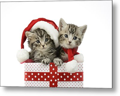 Kitten In Presents Metal Print