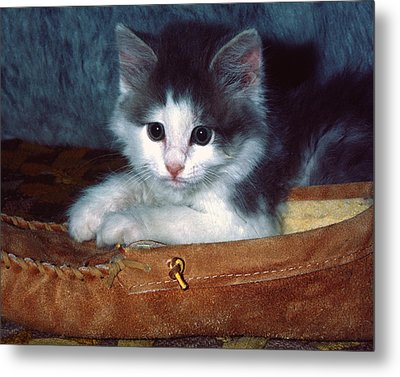 Metal Print featuring the photograph Kitten In Slipper by Sally Weigand