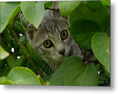 Kitten In The Bushes Metal Print by Scott Lyons