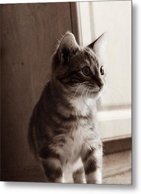 Kitten In The Light Metal Print