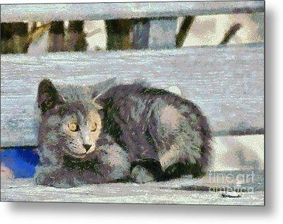 Kitten On Bench Metal Print