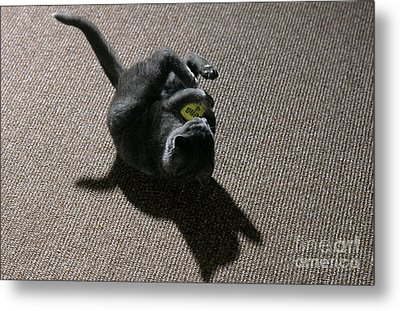 Kitten Playing With Ball Metal Print by James L. Amos