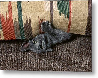 Kitten Under Couch Metal Print by James L. Amos