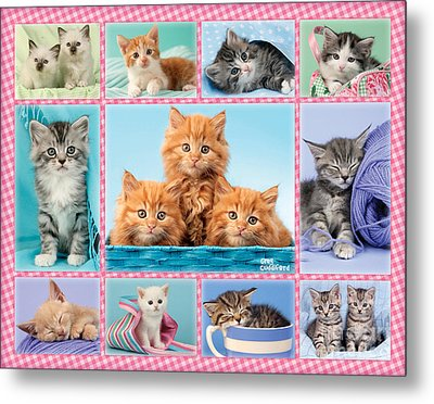 Kittens Gingham Multi-pic Metal Print