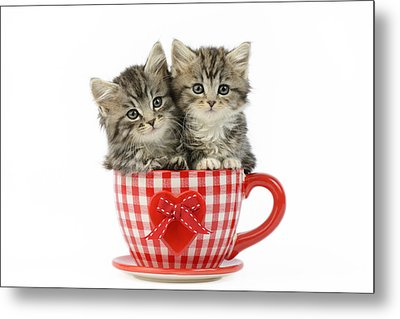 Kittens In A Gingham Cup Metal Print
