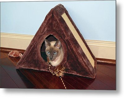 Kitty A-frame Metal Print by Sally Weigand