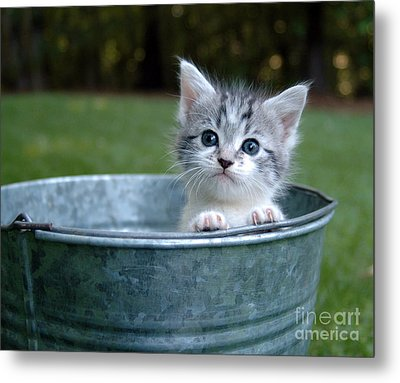 Kitty In A Bucket Metal Print by Jt PhotoDesign