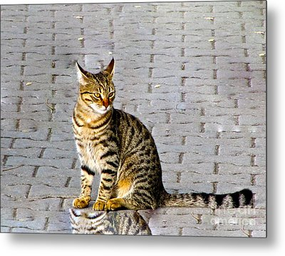 Kitty In Sevastopol Russia Metal Print