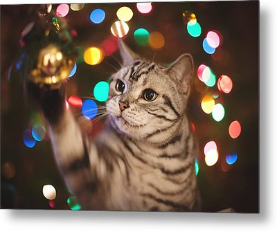 Kitty In The Lights Metal Print