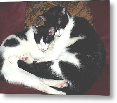 Metal Print featuring the photograph Kitty Love by Marna Edwards Flavell
