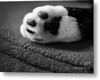 Kitty Paw Close Up Metal Print by Sharon Dominick