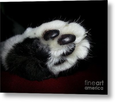 Kitty Toe Beans Metal Print by Heather L Wright