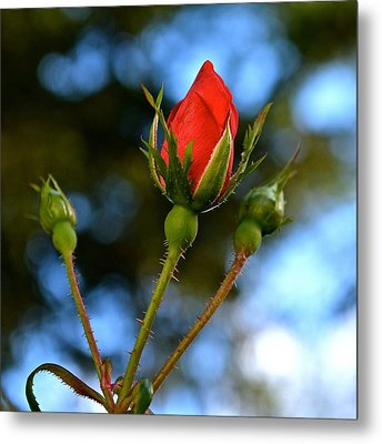 Knockout Rosebud Metal Print
