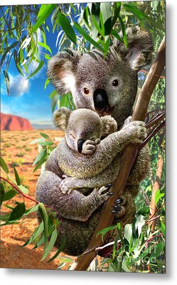 Koala And Cub Metal Print by Adrian Chesterman