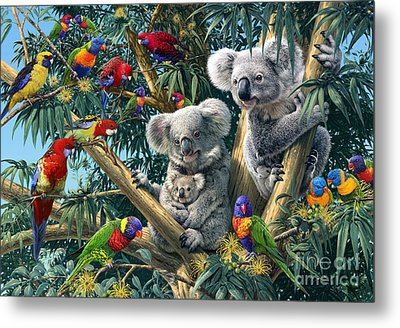 Koala Outback Metal Print by Steve Read