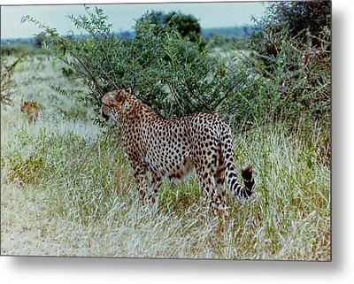 Krugger Cheetah Metal Print