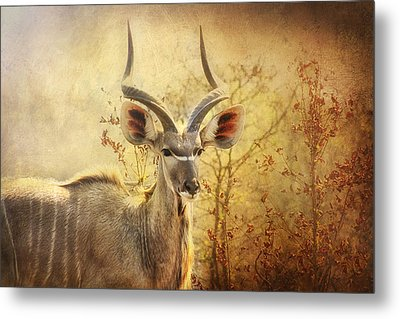 Kudo In The Wild Metal Print by Kim Andelkovic