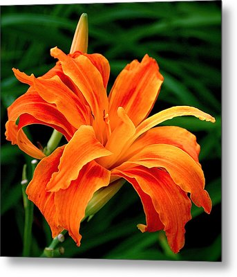 Kwanso Lily Metal Print by Rona Black