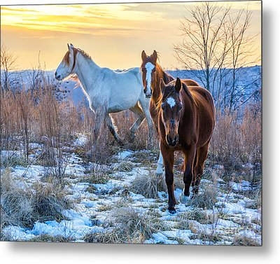 Ky Wild Horses Metal Print by Anthony Heflin