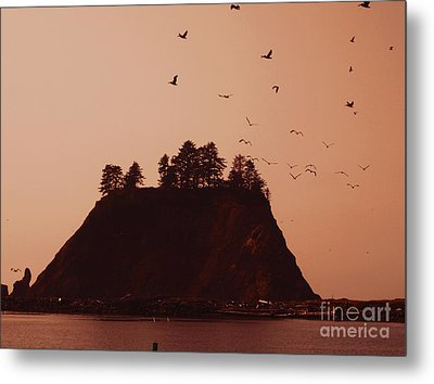 La Push Silhouette With Birds Metal Print by Kym Backland