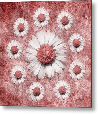 La Ronde Des Marguerites - Pink 02 Metal Print by Variance Collections
