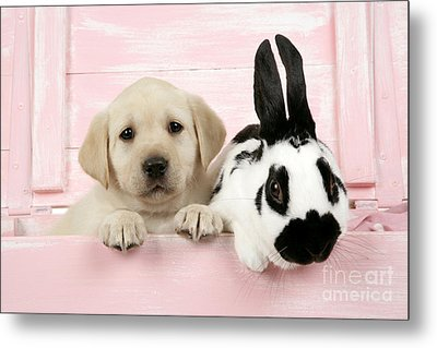 Lab Puppy And Bunny Metal Print by John Daniels