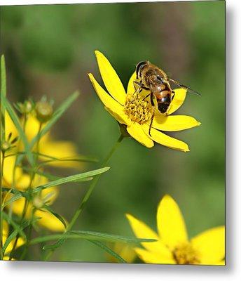 L'abeille Metal Print by Nikolyn McDonald